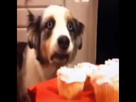 When I'm on a diet and I see delicious food