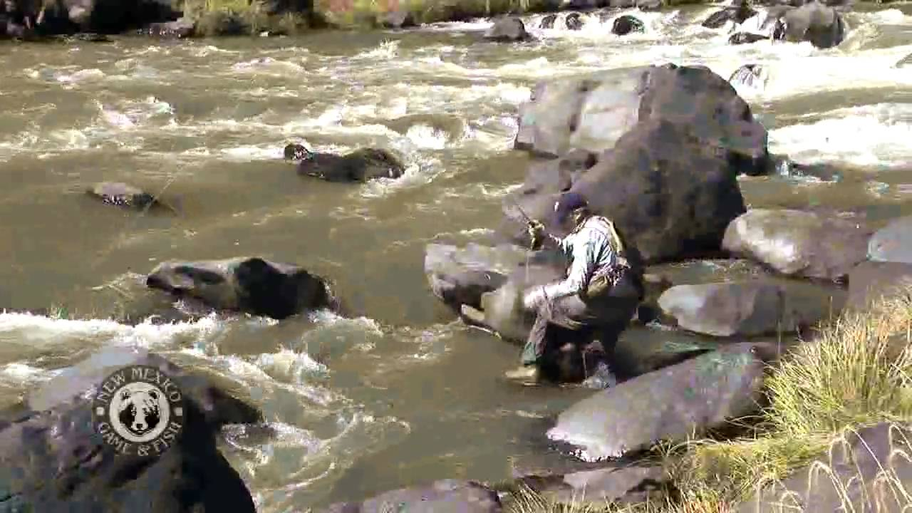 Fly fishing on the rio grande youtube for Rio fly fishing