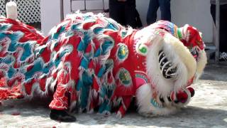 Lion Dance At Chinese New Year In Hong Kong (2) In 2011