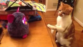 New furby vs. cat