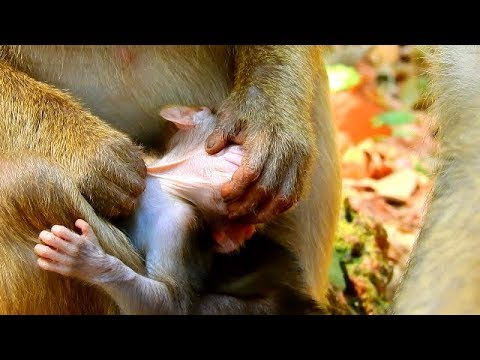 NEW TECHNIQUE OF KIDNAPPING : GROOMING & CARESSING,CARESSING & GROOMING TILL BABY & MOM TRUST