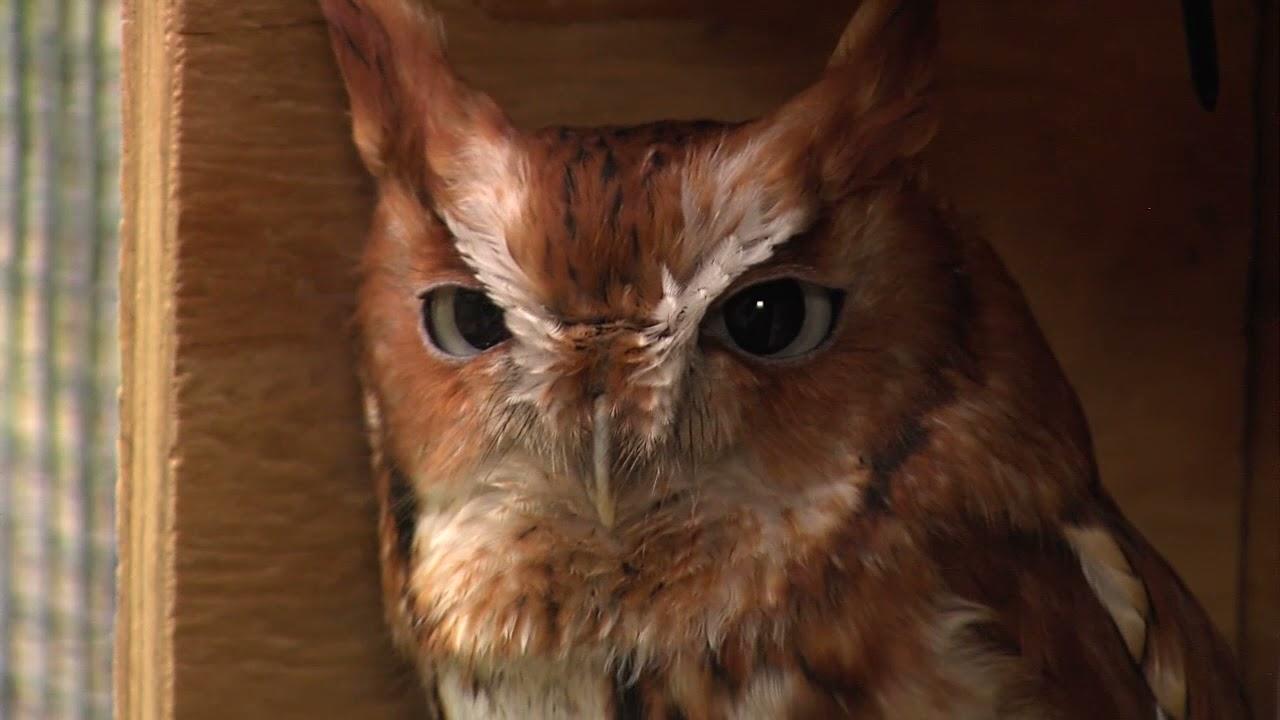 35765Ohio Bird Sanctuary