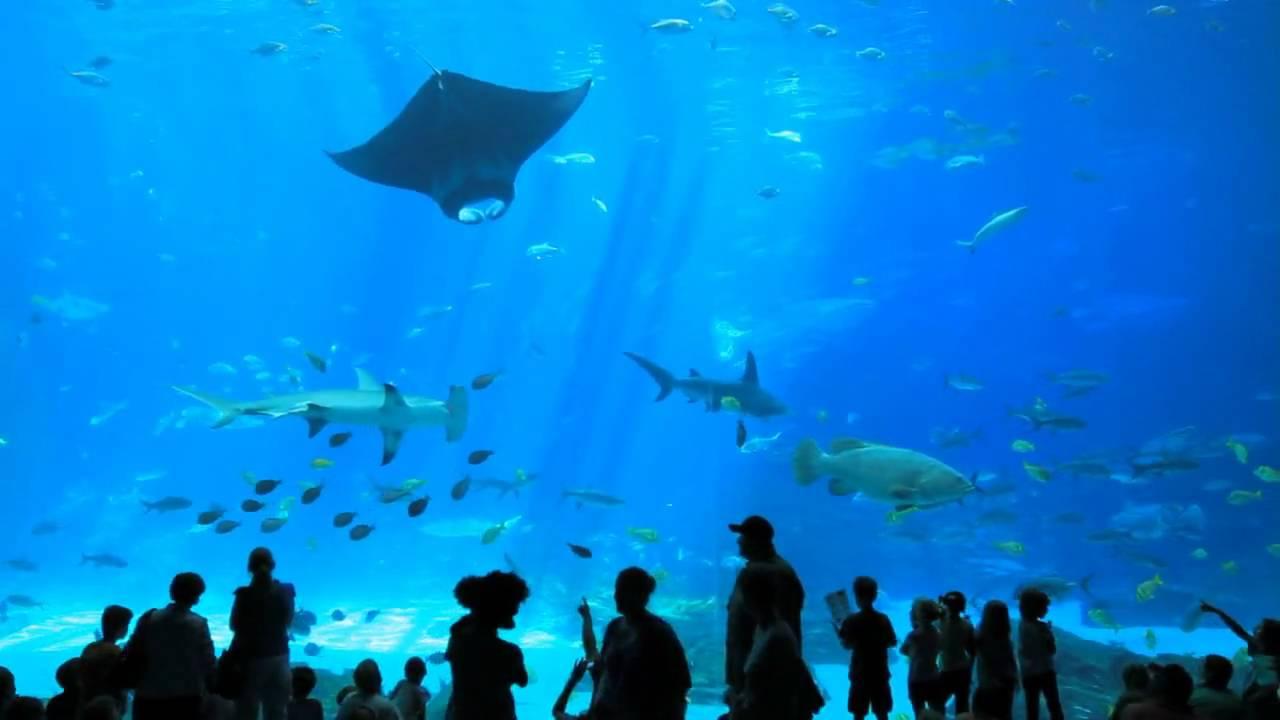 The World's Largest Aquarium // Georgia Aquarium ...