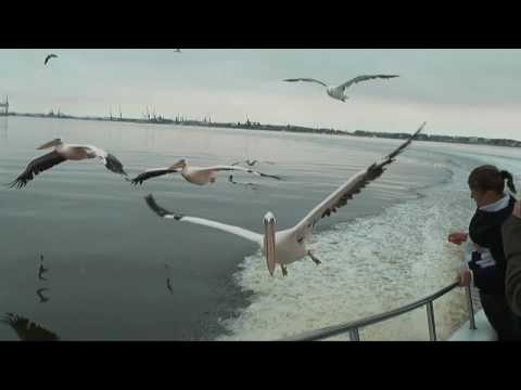 Thumbnail image for 'Flight of the Pelican'