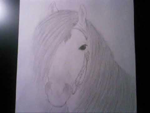 mijn (paarden) tekeningen