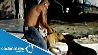 Peleas De Perros, Un Negocio Redituable Para El Crimen