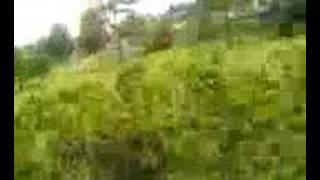 O Ataque Dos Cachorros Selvagens II