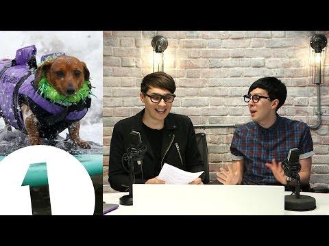 DOG SURF CHAMPIONSHIPS! Dan & Phil's Internet News