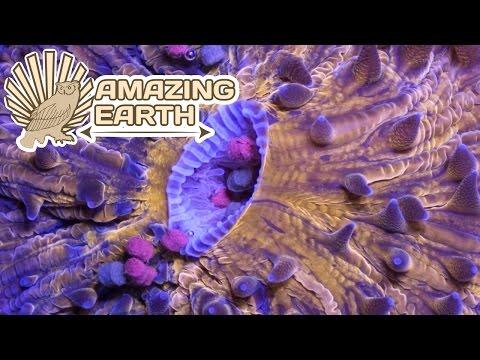 The Bizarre, Beautiful Ocean Creatures - Coral Reefs | Amazing Earth