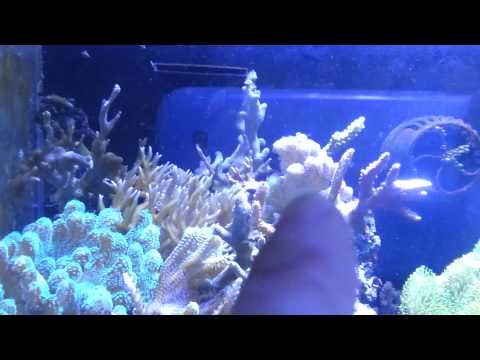 Saltwater Myreefliving Reef and Fish Tanks (nemo again 5-20-13)