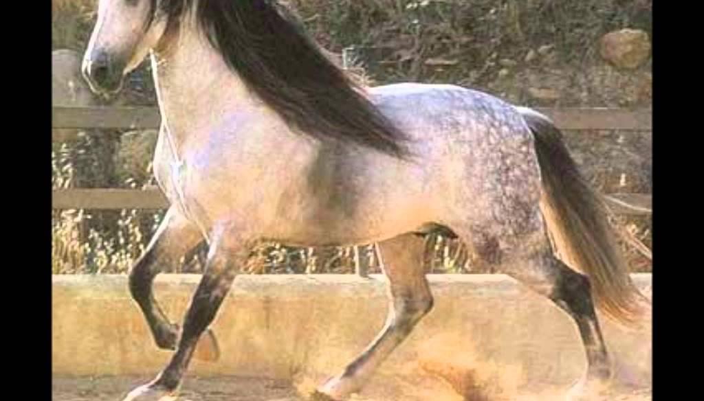 10 sch nsten pferde der welt meine meinung youtube. Black Bedroom Furniture Sets. Home Design Ideas