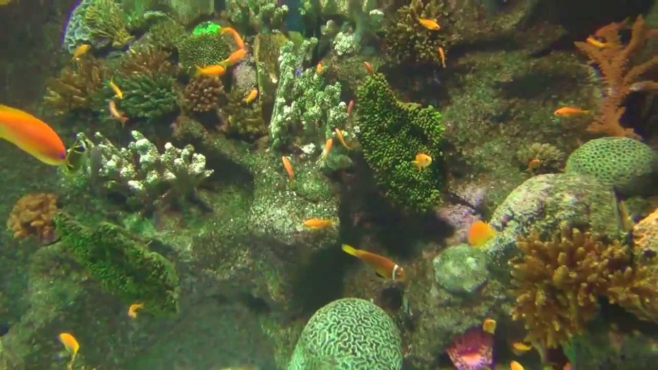 Rare tropical aquarium fish music aquatics 4000 gallon for Rare aquarium fish