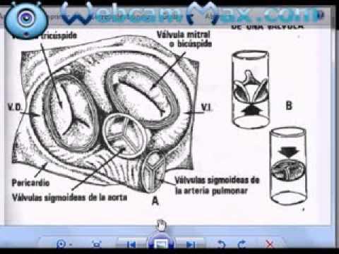 Circulación animal y humana