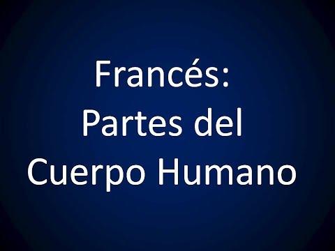 Francés - Lección 16 - Partes del Cuerpo Humano