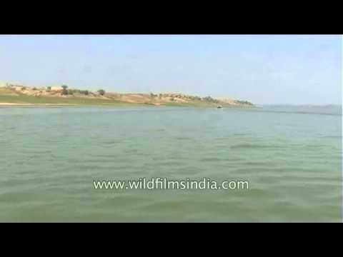 DVD 275 river chambal 5