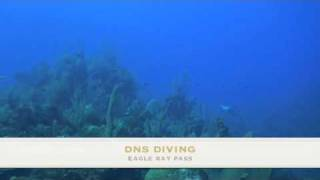 DNS Diving Grand Cayman, Eagle Ray Pass