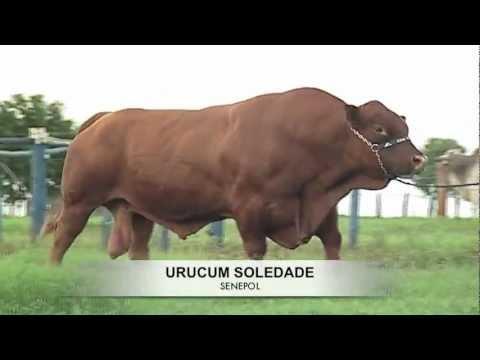 Urucum Soledade (Ano 2013)