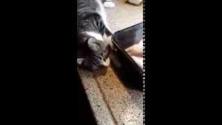 Kitten accidently falls off counter