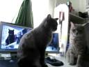 まるで鏡のように反応する猫のやりとり