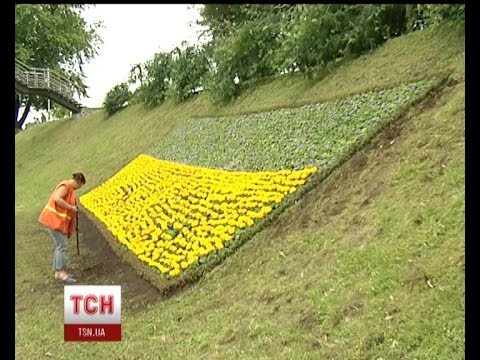 Cамый большой флаг Украины из живых цветов
