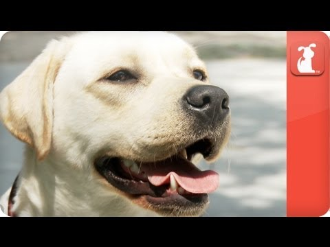 Hot Vet - Vaccines and Dogs - YouTube