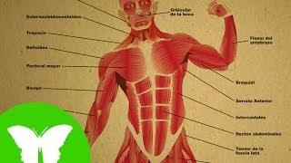 Conocimiento del medio: Los músculos
