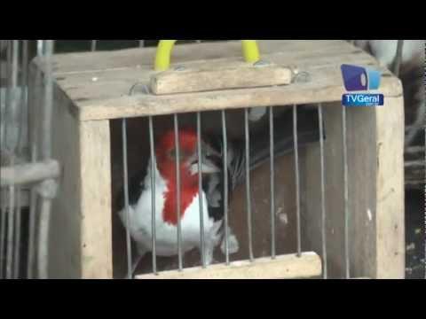 Operação policial apreende pássaros silvestres em Feira