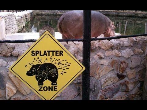 Hippo Explosive Diarrhea It is Emily Chaney