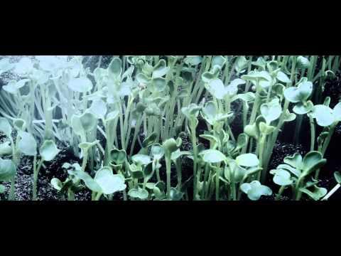 Moonbeam feat. Leusin - Flight (Kairo Kingdom Video Edit)