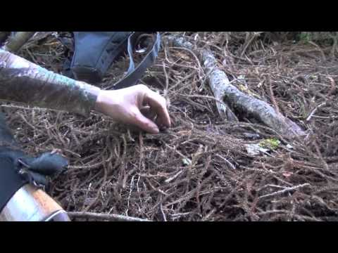 Sika hunting in the NZ native forest - Nov 2013