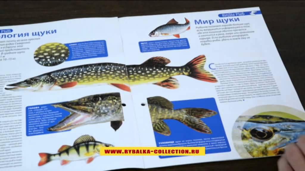 рыбалка энциклопедия рыболова график