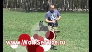Видео - Дрессировка собак, общий курс дрессировки, ОКД собак