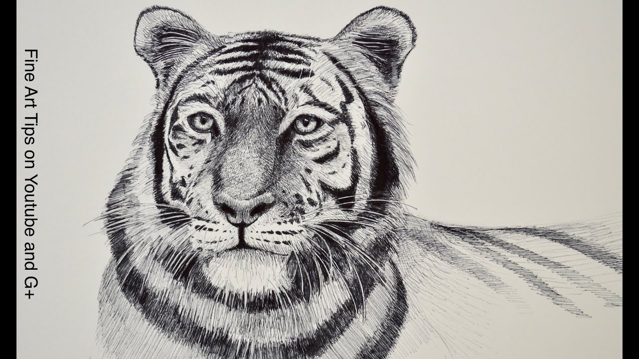 Tiger head drawing - photo#6