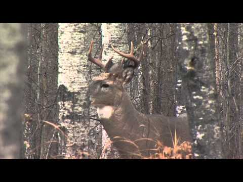 Whitetail Revolution Episode 6 – Original Tecomate Trophy Tip