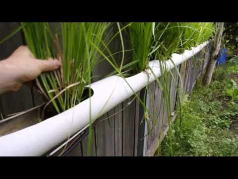 Kitchen water recycling for garden