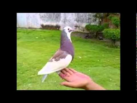 jual kandang burung antik jualbeliburung com media jual kandang burung