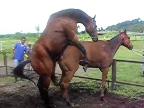 horse breeding tamby1 - YouTube