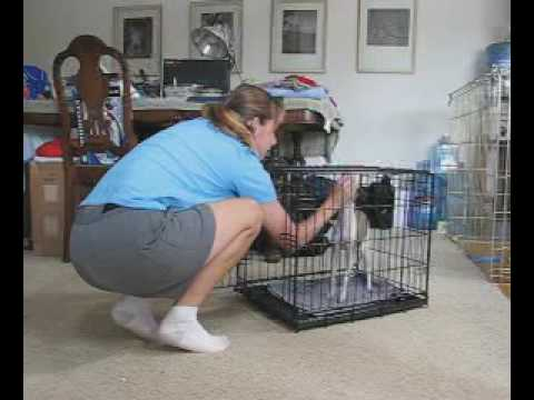 Crate Training Games For Your Dog - TheDogTrainingSecret ...