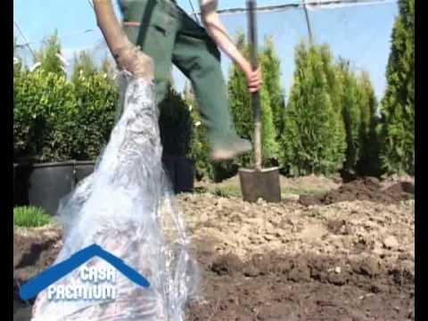 Sfaturi pentru plantarea pomilor