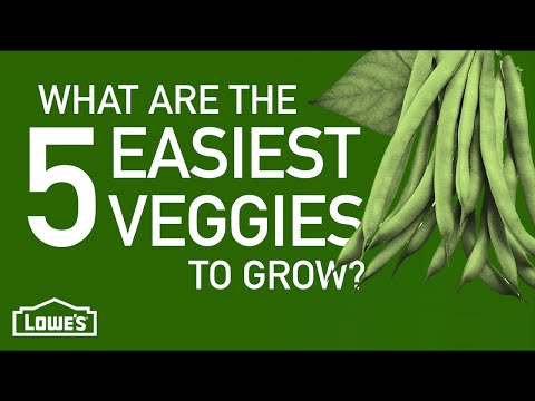 What are the 5 Easiest Vegetables to Grow? | Gardening Basics w/ William Moss