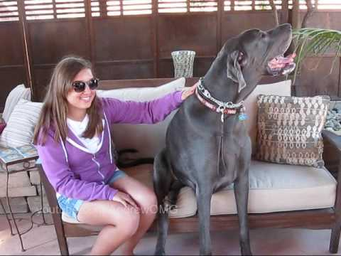 Giant George: The Tallest Dog in the World