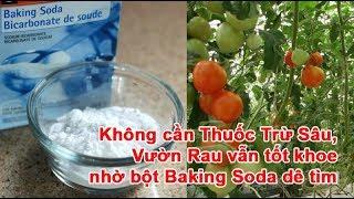 Không cần Thuốc Trừ Sâu, Vườn Rau vẫn tốt khỏe nhờ bột Baking Soda dễ tìm