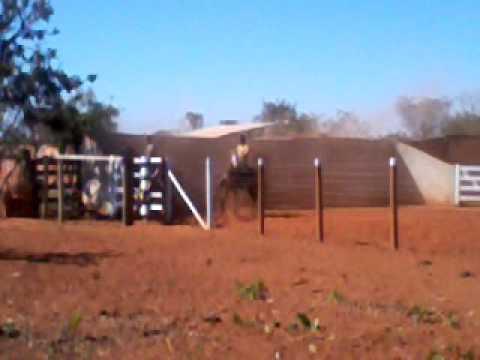 Caio treinando cavalo de vaquejada cavalo (Gladiador )
