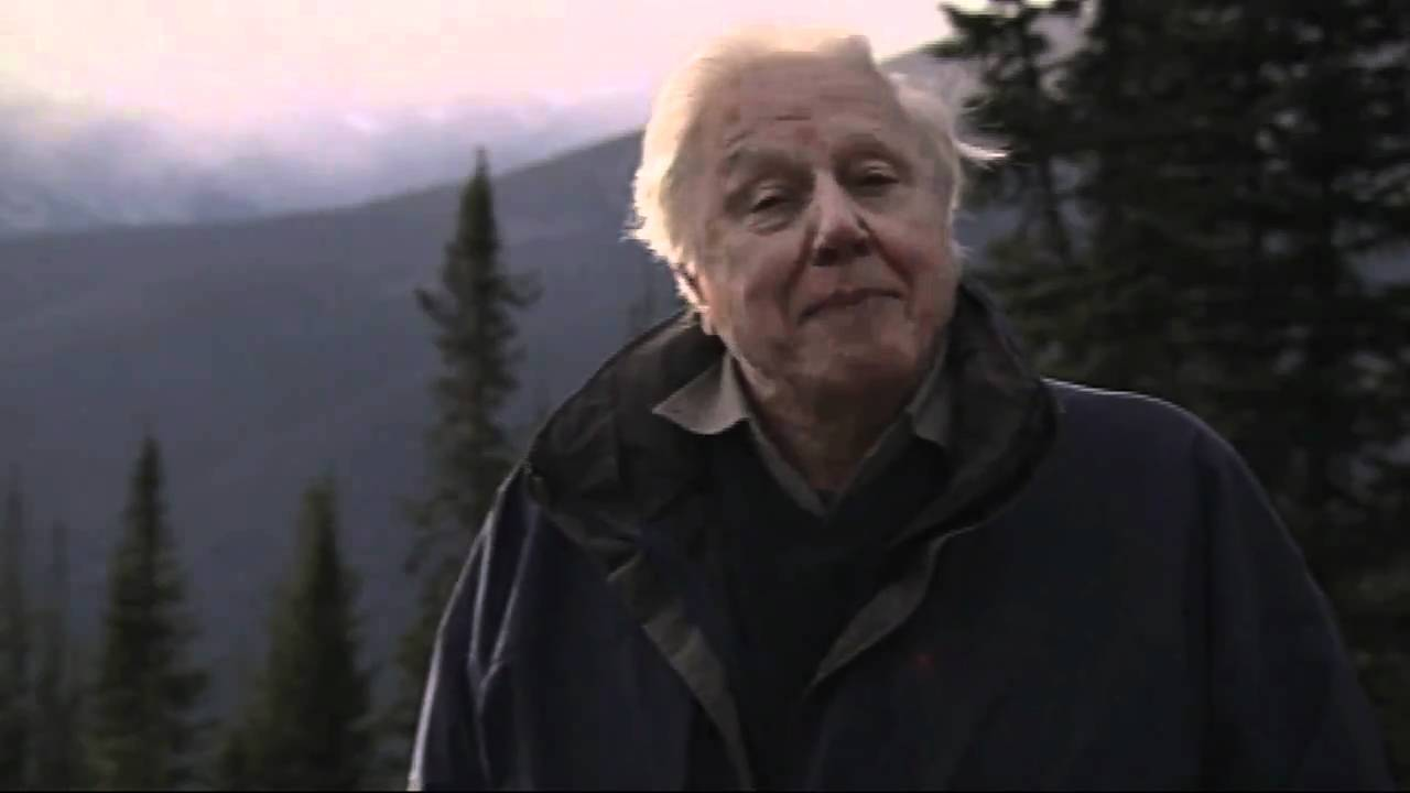 sir david attenborough first life youtube. Black Bedroom Furniture Sets. Home Design Ideas