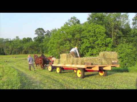 Haying with Draft Horses at Full and By Farm
