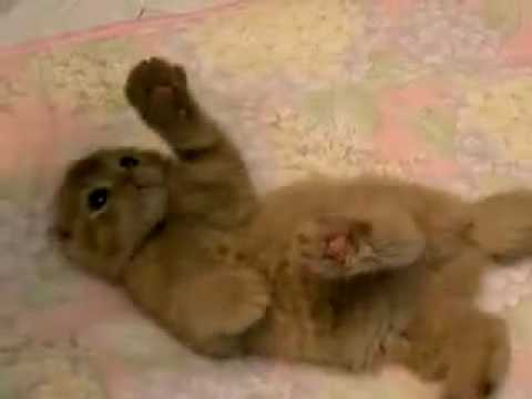 Il gatto piu 39 bello del mondo da vedere youtube for I gioielli piu belli del mondo