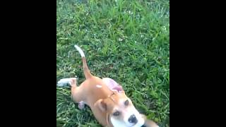 [Puppy fails at playing fetch]