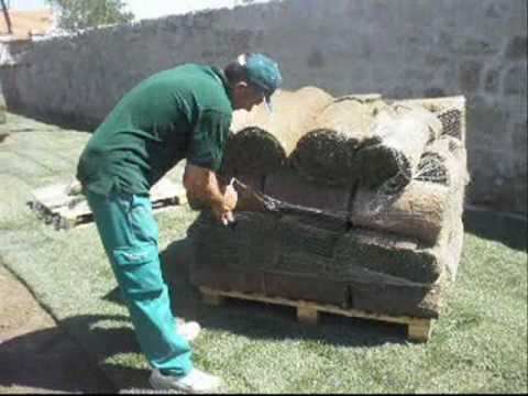 Como plantar c sped natural en rollos o tepes instalaci n - Plantar cesped natural ...