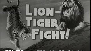 Lion-Tiger Fight, 1946