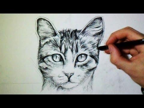 Comment dessiner un chat tutoriel youtube - Dessins de chat ...